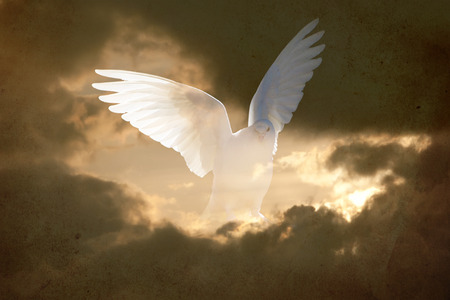 releasing: abstract vintage double exposured conceptual background representing spirit and hope with white dove in the sky