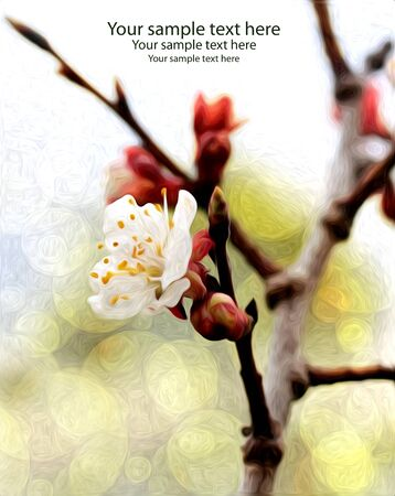greating card: Spring blossom greating card, oil paint style, space for sample text Stock Photo