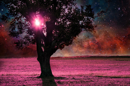 red alien landscape with alone tree silhouette in purple field- elements of this image are furnished by NASA Stockfoto