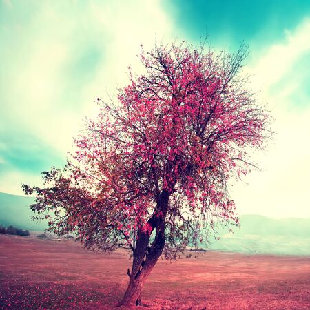 filtered infrared square nature background with alone tree