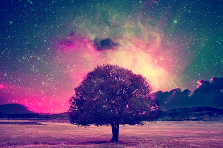 alien landscape: rosso paesaggio straniero con l'albero solo sopra il cielo notturno con molte stelle Archivio Fotografico