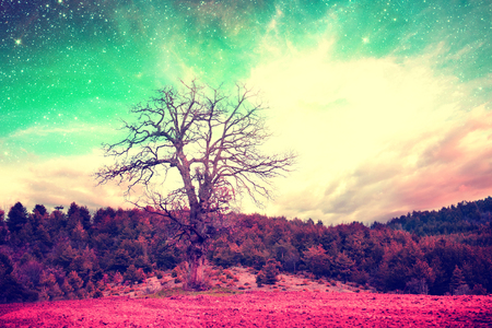 alien landscape: red alien landscape with alone tree over the night sky with many stars