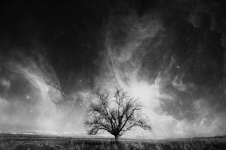 contrasted: abstract high contrasted tree over the cosmic sky