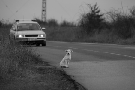 house trained: black and white animal background with sad homeless dog in the road, wait for someone to adopt