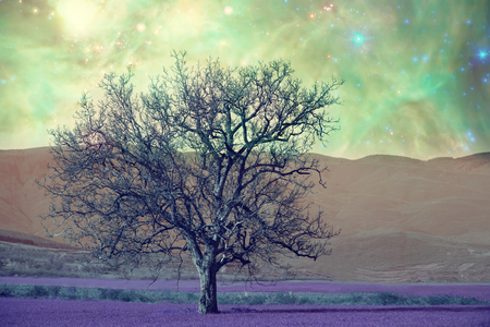 alien landscape: alien landscape with alone tree over the night sky with many stars - elements of this image are furnished