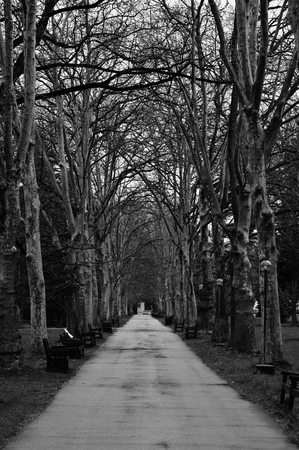 ghostly: black and white abstract landscape with park path, vertical wood ghostly background