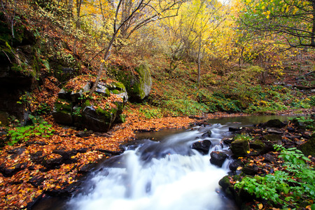 field maple: cold river in bulgarian mountains, autumn forest landscape Stock Photo