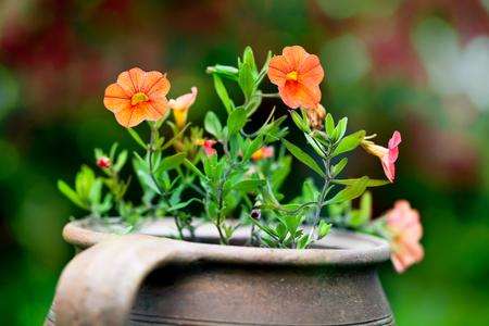 Flowers in garden, vintage pot, macro gardening background, red autumn bokeh Stock Photo
