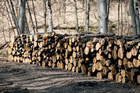 Firewood in the forest