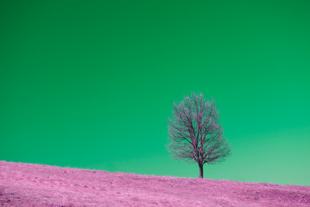 summer meadows red infrared landscape with alone tree Foto de archivo