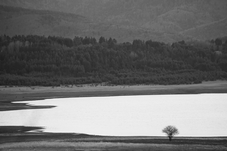 Tree near a dam, minimal black and white art landscape, nature background