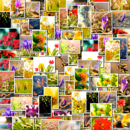 Flower collage. spring background, floral montage from several images