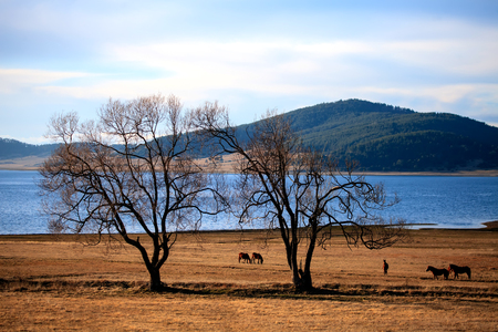 Grazing horses near a high mountain lake