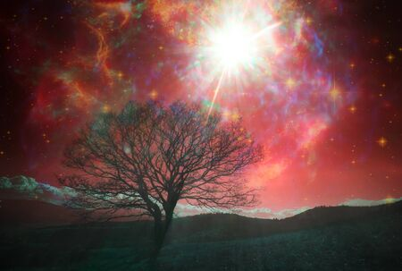 paisaje alienígena rojo con solo árbol sobre el cielo nocturno con muchas estrellas