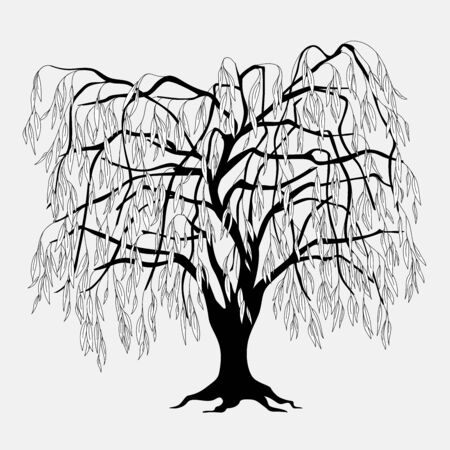 Black silhouette illustration willow tree with leaves. Icon tree isolated on white background.