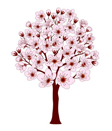 Colorful cherry tree with pink blossom isolated on the white background.