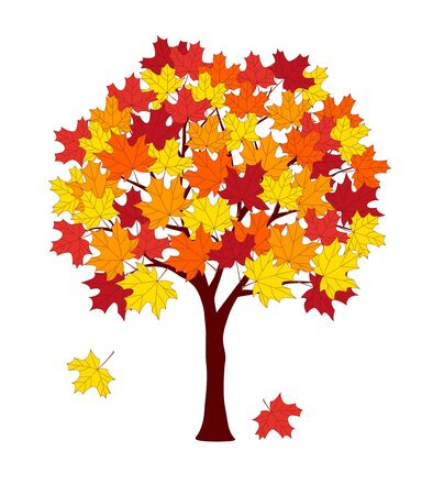 Cartoon maple tree with autumn leaves isolated on the white background.