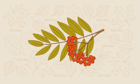 Rowanberry twigs and contour drawing autumn leaves of maple and oak backdrop.