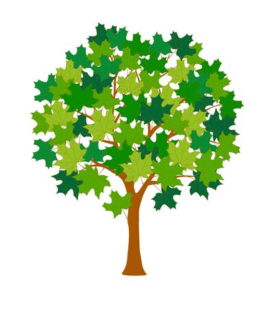 Cartoon maple tree with green leaves isolated on the white background.