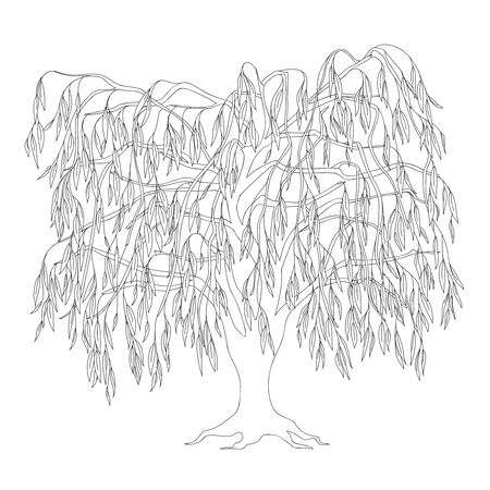 Outline illustration weeping willow with leaves and roots for adult or kid coloring book, tutorials.