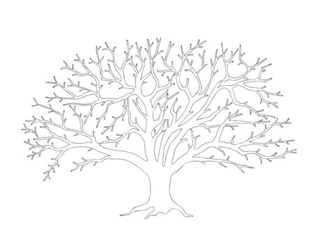 Outline illustration apple tree with roots, without leaves for kids and adult coloring book,  tutorials.