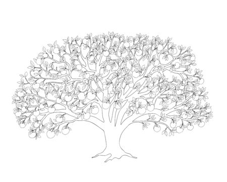 Outline illustration apple tree with leaves and apples for adult or kid coloring book, tutorials.