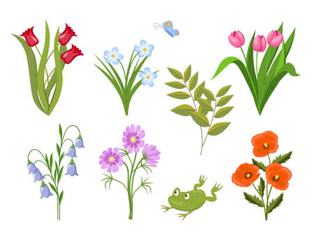 Image with set of summer meadow flowers and frog. Isolated floral bouquets  for t-shirt, tunic or decorate dishes, stationery and mural, wall art. eps 10. 스톡 콘텐츠 - 151597658