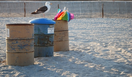 seagull on top of trash can Stock Photo - 9236007