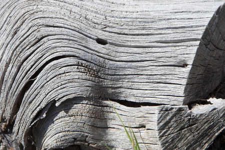 colorless decaying wood texture Stock Photo
