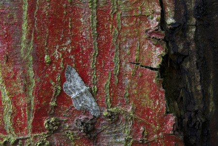 great oak beauty on colorful bark