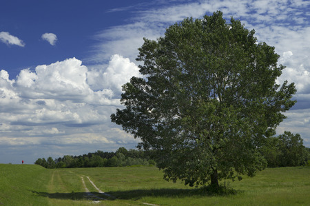 massive tree with dense crown and tiny human figure aside on a cloudy blue sky background