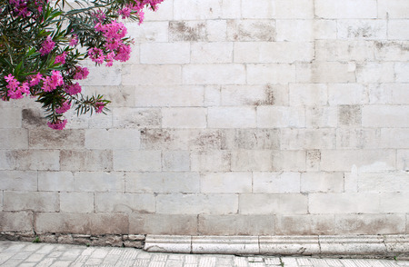 oleander flowers on empty background with medieval stone wall and paved street