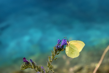 yellow butterfly on blue background