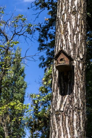 Bird House Stock Photo - 23051409
