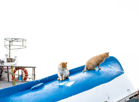 Cats on the boat