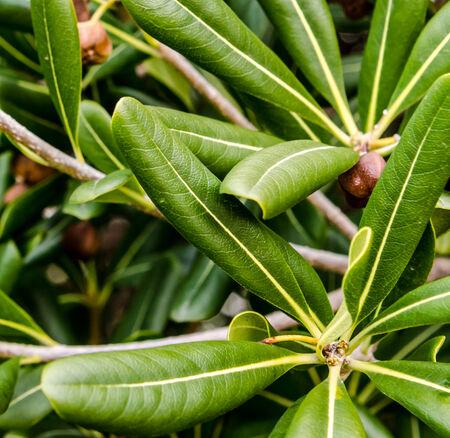 Tropical plant leafs