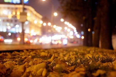 leafs: Autumn leafs on the night street