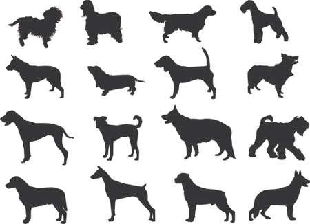 dog nose: cani sagome