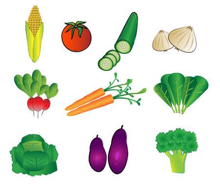 vegetables illustrations