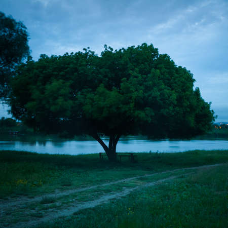 One solid tree with a large canopy overgrown with green leaves resolutely resisted the wind on the bank of a river overgrown with tall grass that waves, during a cloudy and windy summer evening.