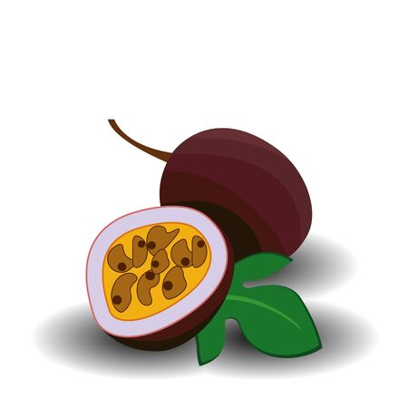 Passionfruit or passion fruit, maraquia, maracuja, maracuya fresh ripe raw whole and half cut exotic berry. Vector square closeup side view realistic beautiful illustration isolated, white background Illustration