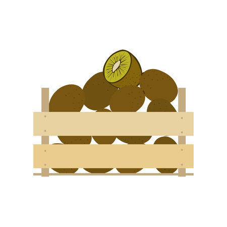 wood crate: Wooden box full of kiwi isolated on white background vector illustration. Fresh fruit, organic farming, vegan food, delivery farm product, grocery store concept. Ripe kiwi fruit in wooden crate icon. Illustration