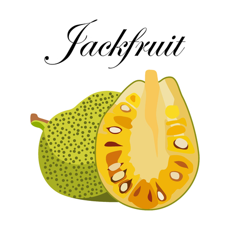 Jackfruit, vector Illustration. Exotic fruit. Hand-drawn style. Illustration
