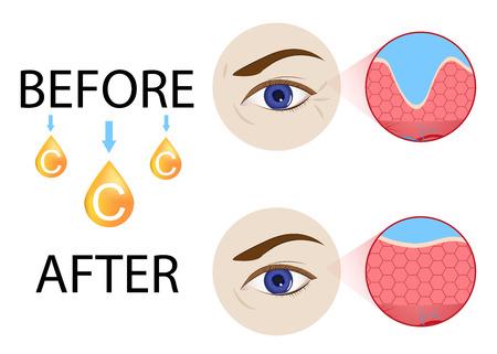 Collagen ,skin vector Illustration