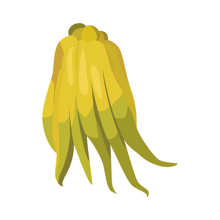 citron: Citron Illustration