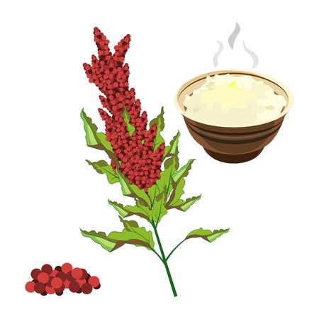 Schizzo disegnato a mano di quinoa super cibo di colore completo. Archivio Fotografico - 84949420
