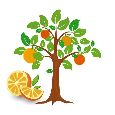 Tree of a orange icon