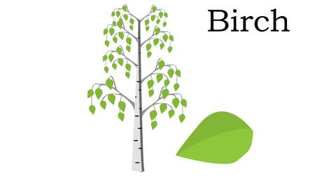 Elemento de vetor de árvores de vidoeiro. ícone de vetor verde