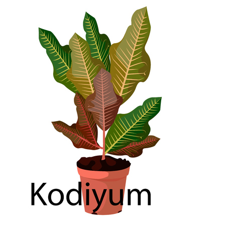 Kodiyum pot for flowers, with earth, pink, for seedlings, pots