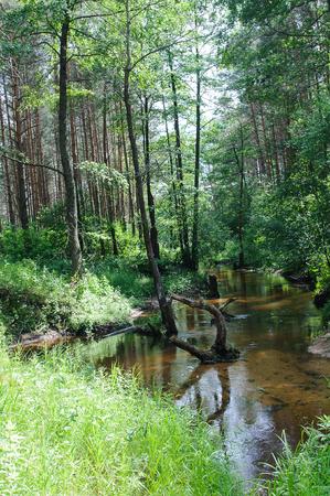 marge: quiet little river flows through the dense forest